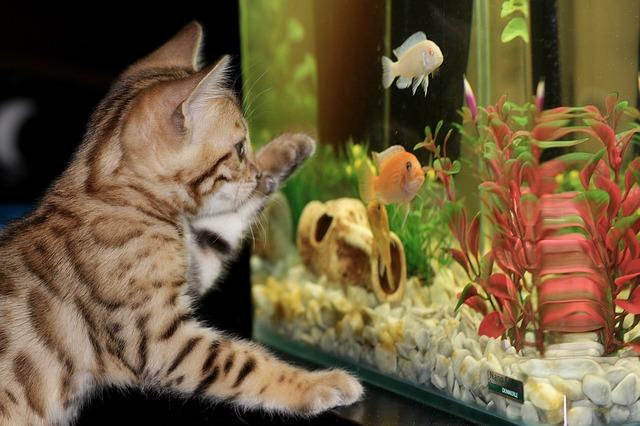 Zakládáme akvárium